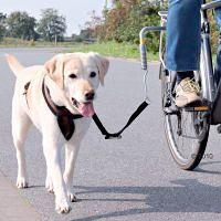 Fahrrad Fahren mit Golden Retriever