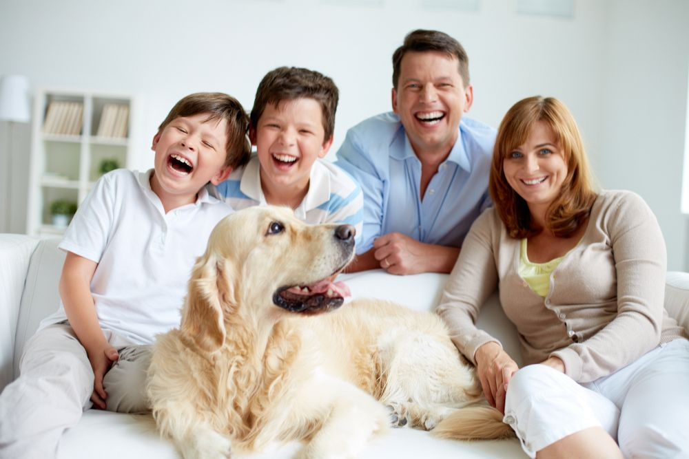 Familienhund Golden Retriever