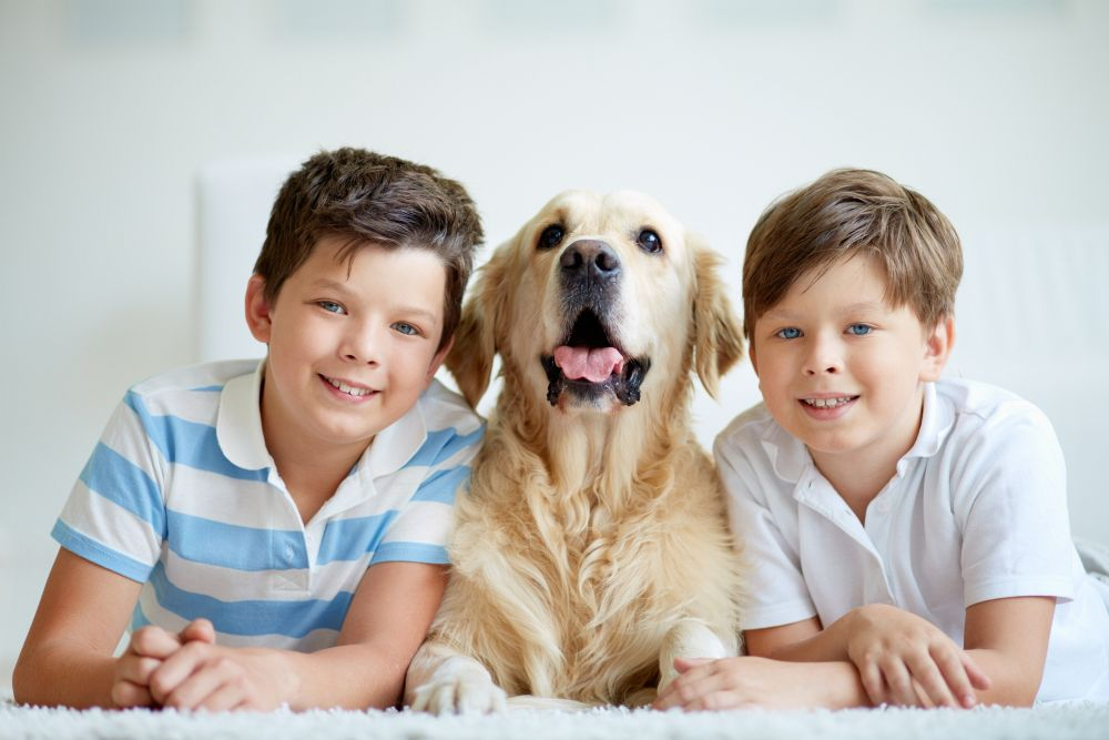 Golden Retriever Familienhund