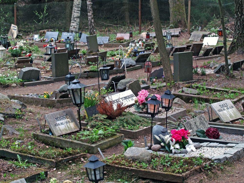 Den Golden Retriever auf dem Tierfriedhof begraben.