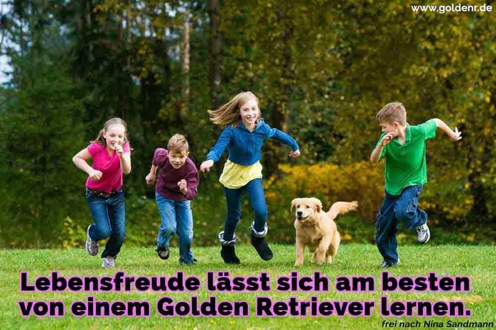 Kinder laufen mit Golden Retriever