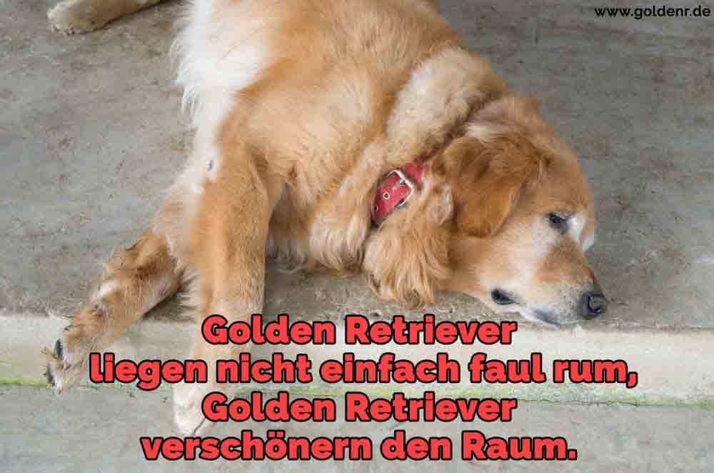 Ein Golden Retriever auf dem Boden schlafen