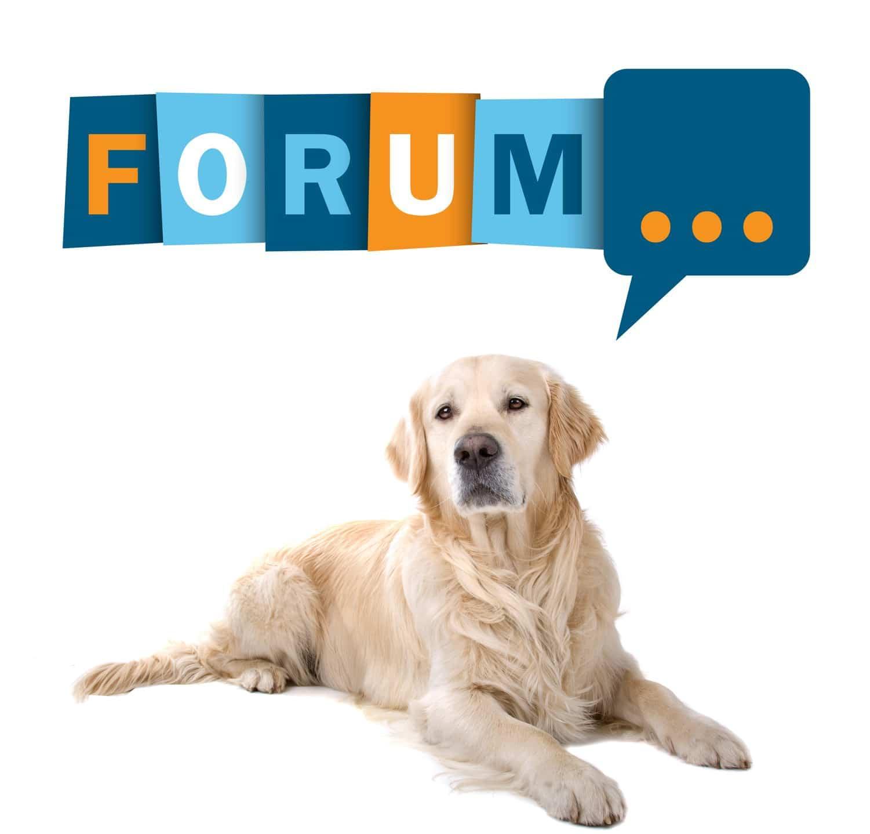 Golden Retriever Forum
