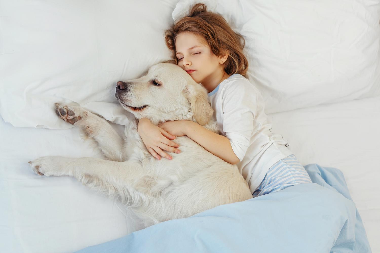 Darf ein Golden Retriever ins Bett?