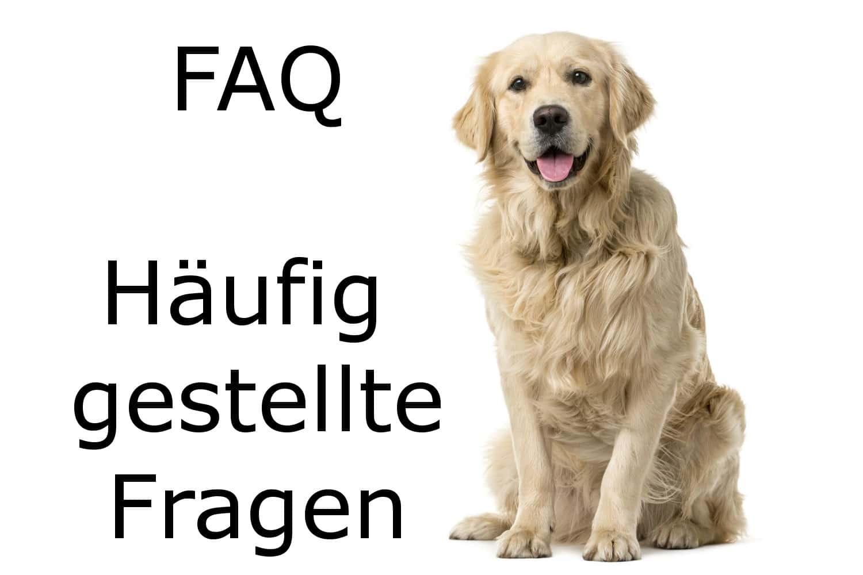 Golden Retriever FAQ
